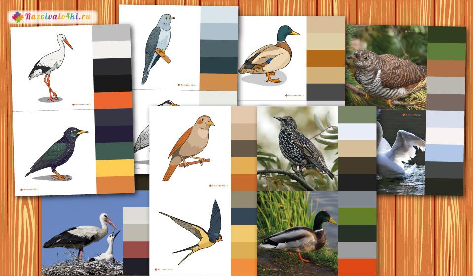 перелетные птицы палитры