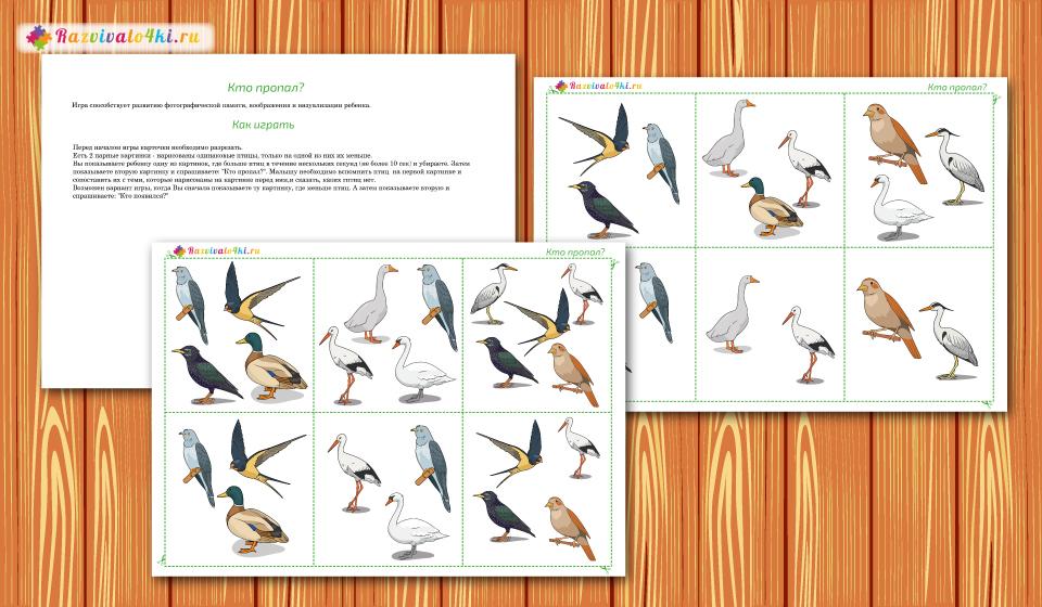 перелетные птицы шичида