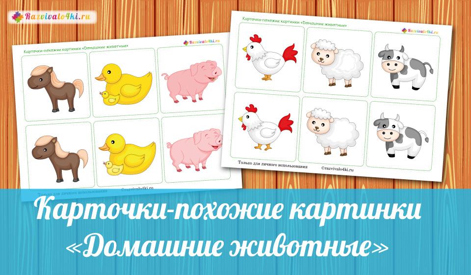 Карточки-похожие картинки