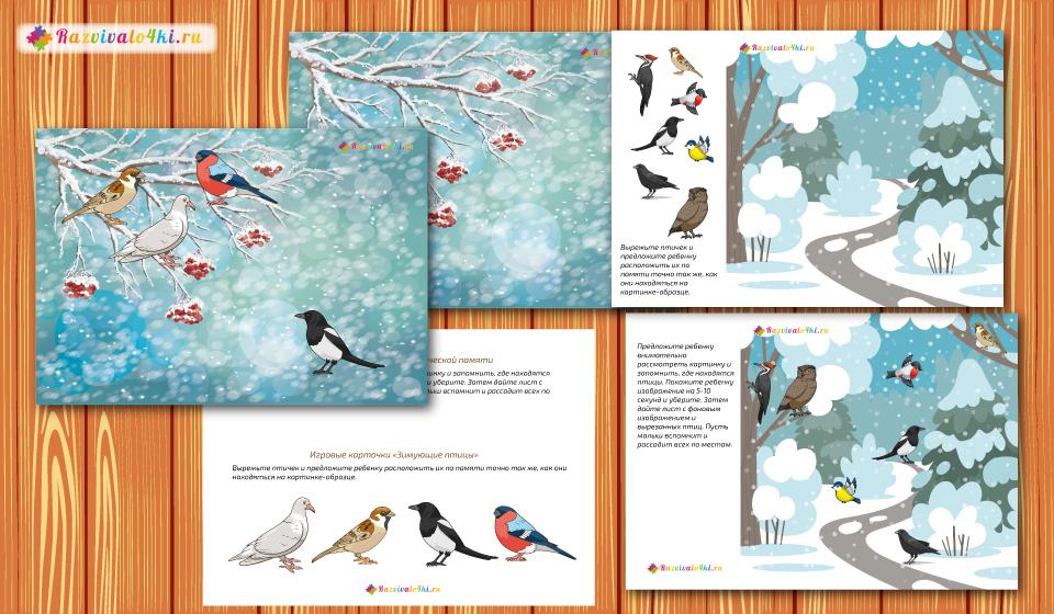 развитие фотопамяти, зимующие птицы