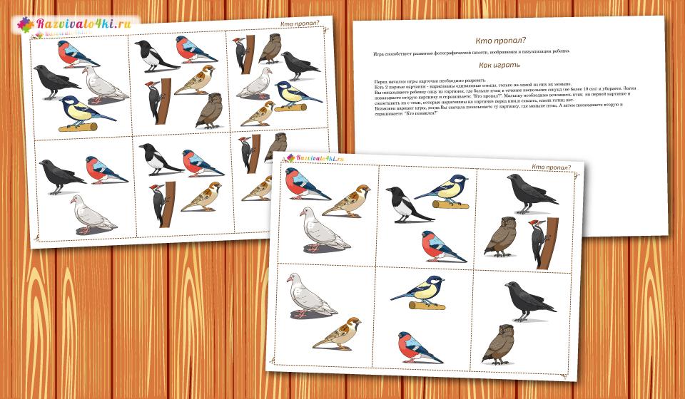 развитие фотографической памяти, зимующие птицы
