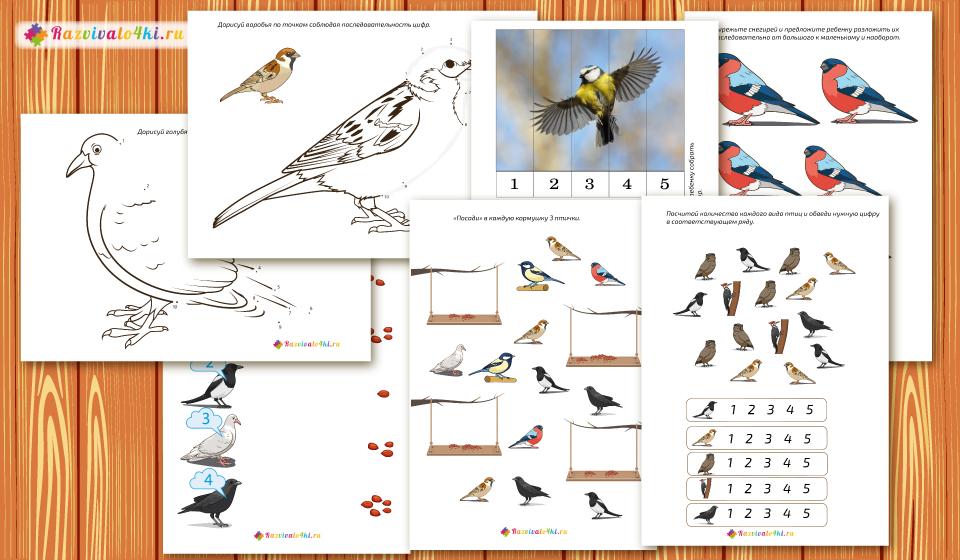 математика зимующие птицы