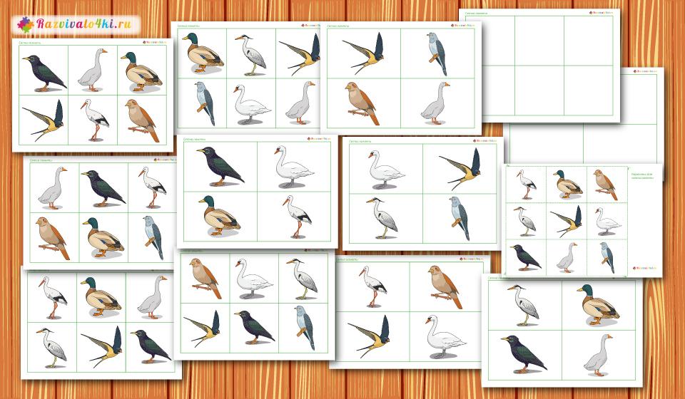 перелетные птицы сетки памяти