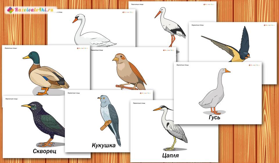 перелетные птицы для детей