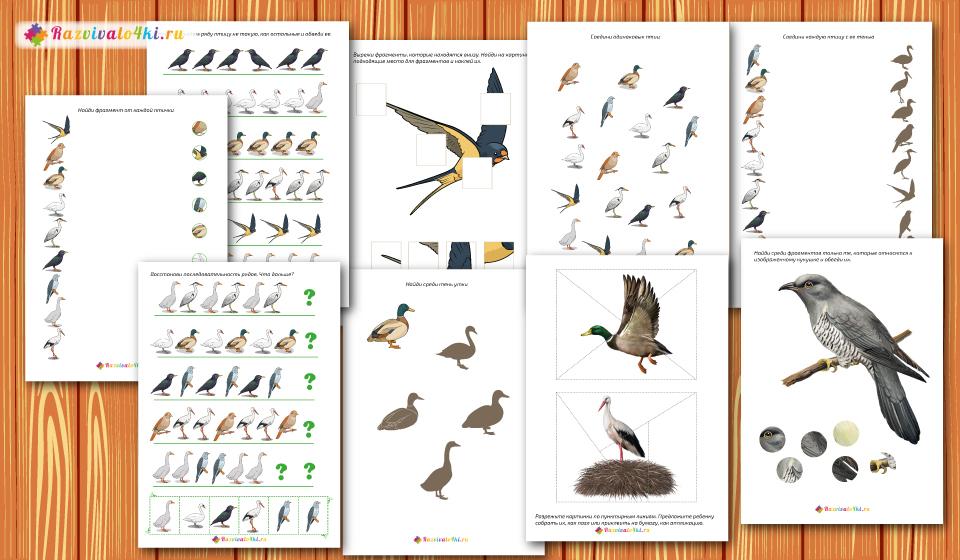 перелетные птицы логика внимание мышление