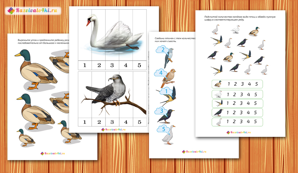 перелетные птицы математика