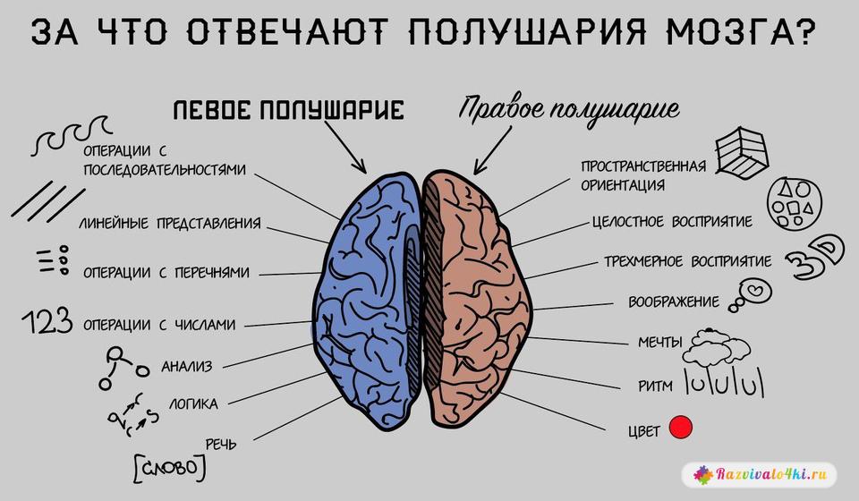 функции левого полушария, функции правого полушария