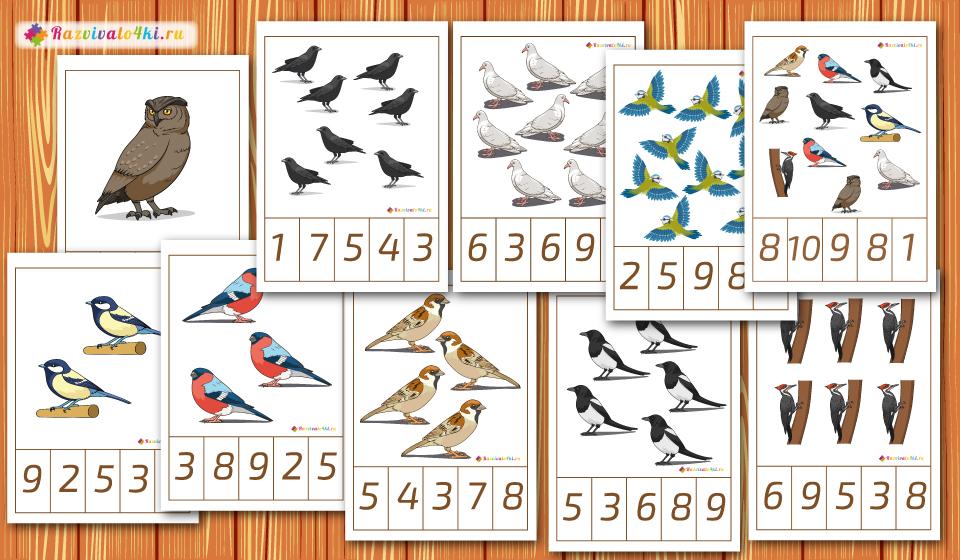 считаем, зимующие птицы