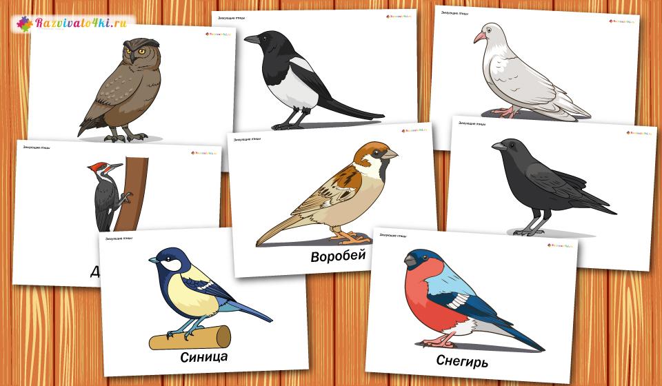 карточки зимующие птицы