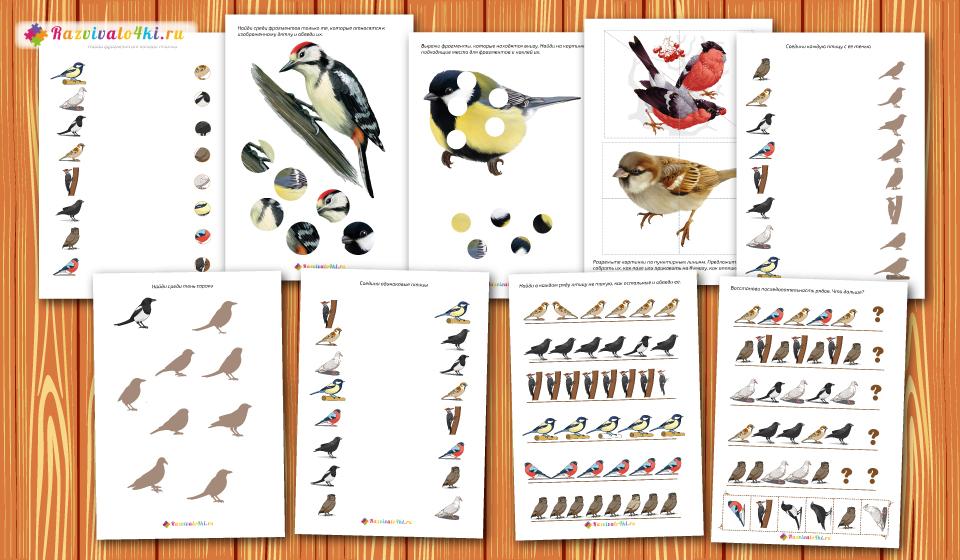 развитие логики внимания мышления, зимующие птицы